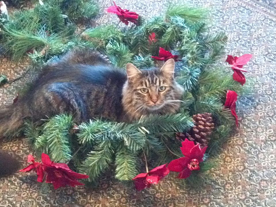 """""""My cat Bob helping decorate.""""  Submitted by Tim Yeany."""