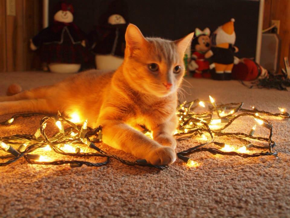 """""""Happy Holidays from Tanner.""""  Submitted by Abbey Jones."""