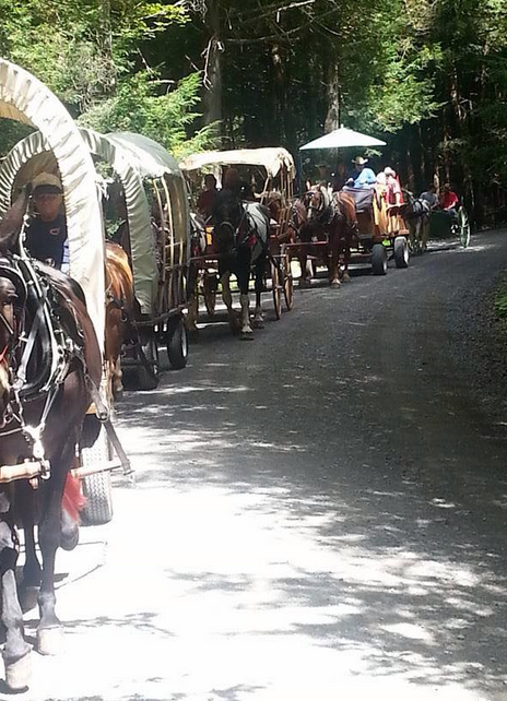 Taken at the annual wagon ride at the Wolf's Corners Fairgrounds. Photo by Marci Mays Steinman.